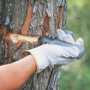Tree Girdler Tool
