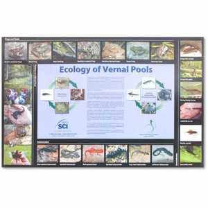 Ecology of Vernal Pools Poster