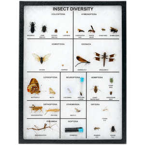 Classroom Riker Mount Insect Diversity