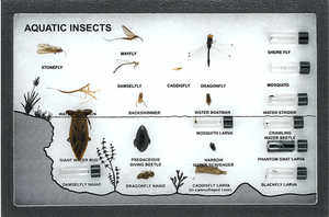 Classroom Riker Mount Aquatic Insects