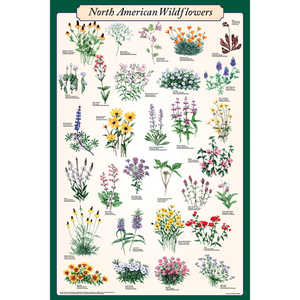 North American Wildflowers Educational Classroom Poster