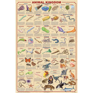 Animal Kingdom Educational Classroom Poster