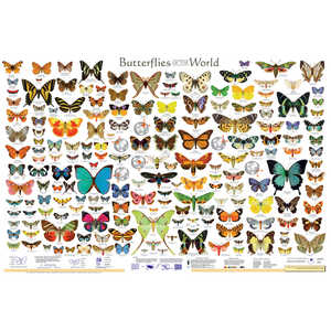 Butterflies of the World Educational Classroom Poster