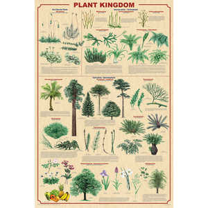Plant Kingdom Educational Classroom Poster