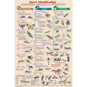 Insect Identification Educational Classroom Poster