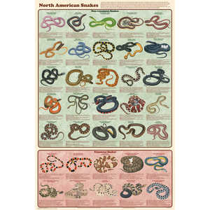 North American Snakes Educational Classroom Poster
