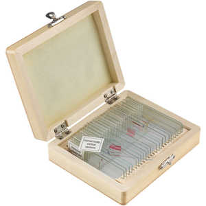 Microscope Slide Set, 25 Slides