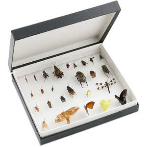 Standard Insect Box