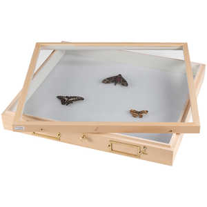 Model 1013AF - Cornell University Cabinet Insect Drawer