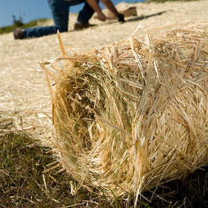 Single Net Straw Erosion Control Blanket, 8' x 112.5'